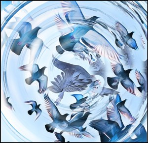 Pigeons in vortex by Beth Clifton