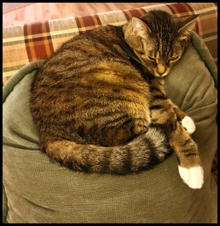 Cat laying on a pillow | Animals24-7.org