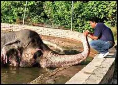 Kaavan elephant & Amir Khalil