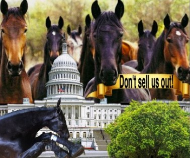 WS713 WARNING THESE HORSES ARE MICROCHIPPED SIGN PROTECTED WELFARE THEFT