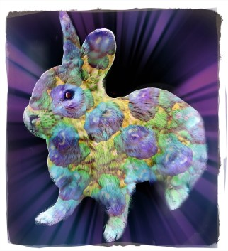 Colorful rabbit | Beth Clifton collage | ANIMALS 24-7