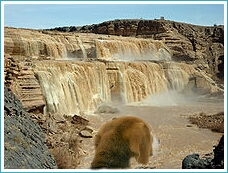 Dog surveys Great Falls (higher than Niagara Falls) on the Navajo Nation. (Beth Clifton collage)