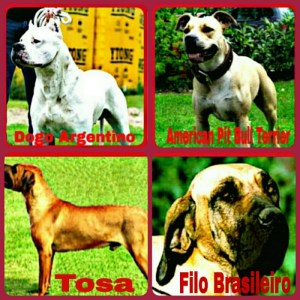 The U.K. Dangerous Dogs Act 1991 bans these breeds, but Staffordshire pit bulls were exempted in 1997.