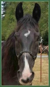 Beth horse