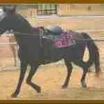 Kentucky Congressman who fought for walking horses resigns