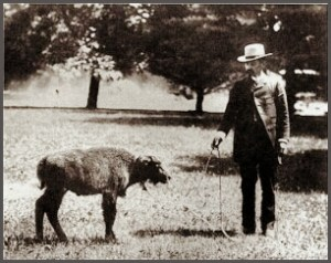 William T. Hornday and baby bison.