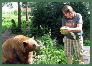 Vet tech Whitney Mathern feeds a bear at Spirit of the Hills in 2009. (Spirit of the Hills photo)