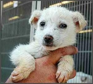 Dog rescued from a failed no-kill shelter. (San Bernardino County Animal Shelter photo)