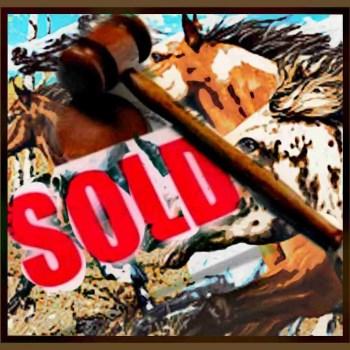 Auction date set for survivors of ISPMB wild horse sanctuary meltdown