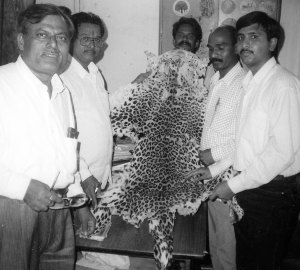 Animal welfare inspector Dharmesh M. Solanki of Ahimsa First in Mumbai (far right) posed in March 2000 with Thane wildlife conservation officers and a fresh leopard pelt that Solanki's brother's mother-in-law found in a garbage bin, after a poacher apparently feared getting caught and dumped the evidence. The case was not firmly linked to Sansar Chand, but appeared to follow his modus operandi.