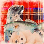 Scotland seal, salmon.