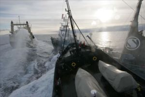 Sea Shepherd's M/Y Steve Irwin (foreground) collides with Japanese harpoon whaling ship the Yushin Maru No. 3, during an engagement in Antarctica's Ross Sea on Friday, Feb. 6, 2009.  Sea Shepherd attempted to block the harpoon ship from offloading a newly caught minke whale to factory ship, the NIsshin Maru (background).  (Photo by Adam Lau/Sea Shepherd Conservation Society)
