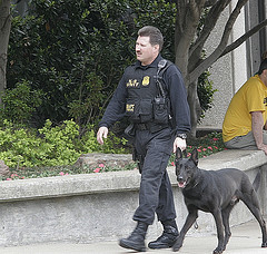 Secret Service dog on patrol.