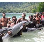 Will Solomon Islands dolphin hunters profit from crackdown on Taiji?
