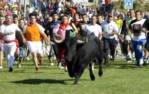 """Unarmed activists tried to chase a bull named Volante away from a heavily armed mob of """"bull hunters"""" at the 2012 Toro de la Vega in Tordesillas,  Spain.  (Spanish Animal Defenders)"""