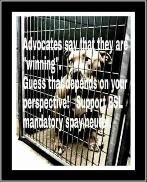 Spay/Neuter pit bulls