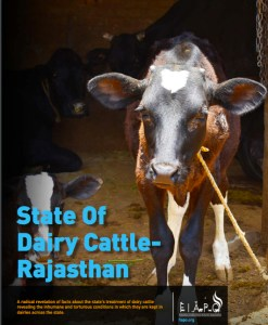 state-of-dairy-cattle-in-rajasthan