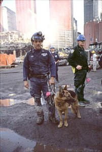 SAR dog on duty at the World Trade Center. (Joel Meyerowitz photo)