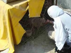 Tehran woman feeding a recently rescued dog. (VAFA photo)