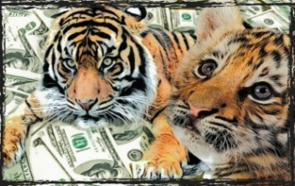 Tiger and tiger cub with money