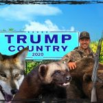 Wolves, grizzly bears, wolverines & right whales sacrificed to Trump re-election bid