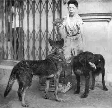 Valentine Holdosi and his rescued animals.
