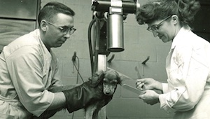 University of Minnesota veterinary researchers circa 1960.