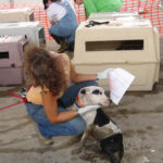 Last Hurricane Katrina dog evacuation case ends in Arkansas