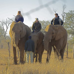 """""""Elephant Lady"""" of Zimbabwe dies"""