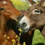Sex,  drugs,  & wild horses