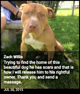 Zachary Willis found a stray pit bull