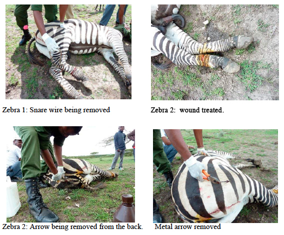 Zebra rescue copy