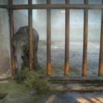 Update re:  Baby elephants captured for export to China