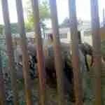 Were Zimbabwean baby elephants bootlegged to China?