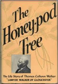 Honey-pod Tree