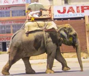 Elephant at work in Jaipur street,