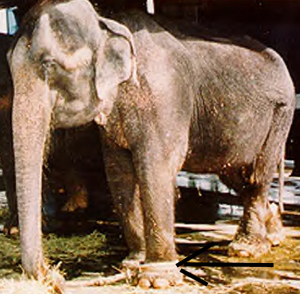 Joyce late in life. (The Elephant Alliance photo)
