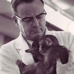 Maternal deprivation experiments with baby monkeys confirmed cancelled at University of Wisconsin-Madison