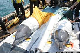 Two of O'Barry's successful dolphin releases.