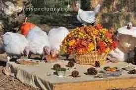 (Farm Sanctuary photo)