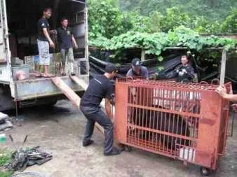 June 2015 bear farm closure