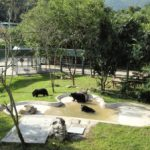Vietnam Bear Rescue Centre fights takeover attempt by zoo promoter