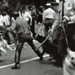 Bad dogs & minority communities