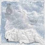 Murdered white wolf and white spirit wolf