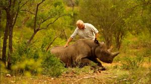 Veterinarian Jacques Flamand & rhino. (World Wildlife Fund.)