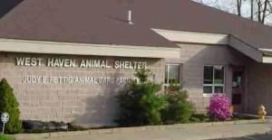 West Haven animal shelter