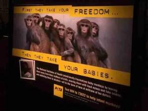 PETA poster protesting Suomi's experiments.