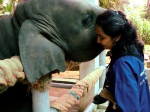 Soraida Salwada (Friends of the Asian Elephant photo)