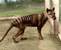 The last thylacine died at the Beaumaris Zoo in Hobart, Australia, in 1936.