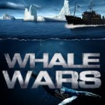 Sea Shepherds to pay Japanese whalers $2.55 million in damages